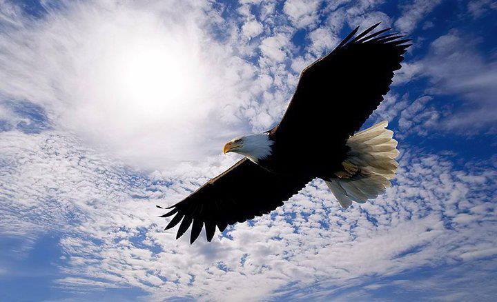 Hình ảnh đại bàng sải rộng cánh bay trên bầu trời